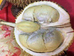 Avattu durio-hedelmä. Hedelmäliha on jännän voimaista ja maku on aika lähellä sokerissa paistettua sipulia. Jännä.